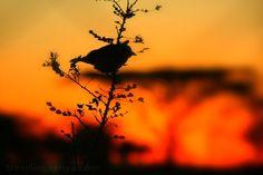Good Morning from Leleshwa, Kenya. http://www.thesafaricoltd.com/index.php/safari-catalogue/item/leleshwa-camp