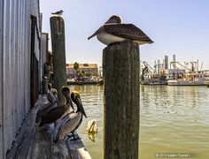Galveston Texas Pier 19