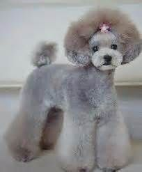 japanese style dog grooming - Yahoo Image Search Results