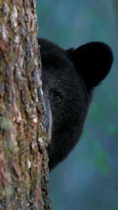 Black Bear, Brown Bear, Panda Bear, Polar Bear, Kenai Fjords, What A Beautiful World, Timber Wolf, Animal Statues, Animals