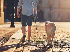 #Umzugstipps – #Hund #anmelden, #unmelden oder #abmelden