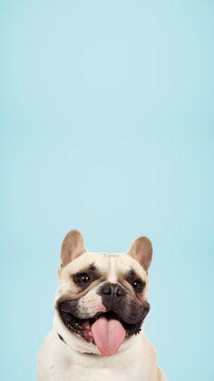#phonewallpaper #dog #blue