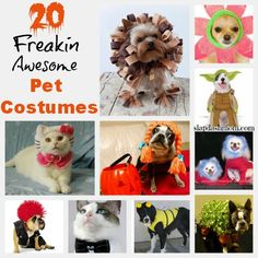 20 Freakin Awesome Last Minute Pet Costumes. I wish my pets would let me dress them up for Halloween!
