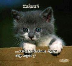 Good Morning Good Night, Grumpy Cat, Needle Felting, Fun, Animals, Hair Styles, Hair Plait Styles, Animales, Animaux