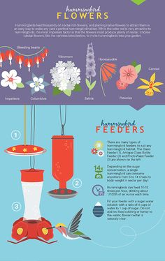 Hummingbird Infographic                                                                                                                                                      More