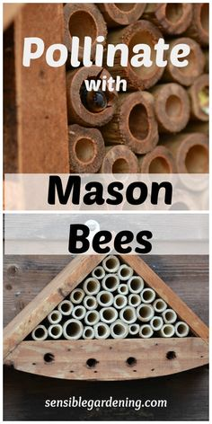 Mason Bees polinate more than honey bees you just dont' get honey as reward... FOOD is your reward.   Pollinate with Mason bees at Sensible Gardening Mason Bees, Little Gardens, Garden Planning, Gardening Tips, Organic Gardening, Urban Gardening, Beekeeping, Insect Hotel, Bees Knees