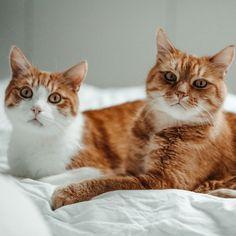 """💚Na? Wer würde bei diesem Wetter ☔️ auch lieber im Bett 🛌 bleiben? 🙈 Die letzten Tage waren schon so richtige """"Gammel-Tage"""", wo man am liebsten den ganzen Tag Netflix schaut und mit den Kätzchen 😻kuschelt, finde ich zumindest. Wem geht es noch so?⠀ —————————————————————————⠀ #kittensdaily #meows #9cattagram #kittys #cats_today #happycats #catloversworld #cutecatskittens #pleasantcats #balousfriends #bestmeow #cutecats #lovemycat #cats_mylove #happycatclub  #catsofig #meowdels… Nadja, Netflix, Cats, Instagram, Animals, Stay In Bed, Cuddling, Weather, Gatos"""