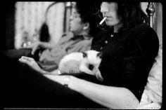 Roger Waters, Pink Floyd, cat