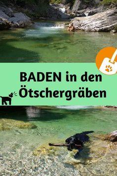 Flussbaden mit Hunden in den Ötschergräben - Ausflugstipp ins Mostviertel