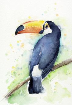 Watercolor Toucan Art Print featuring the painting Toucan Watercolor by Olga Shvartsur - Fine Art America