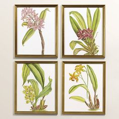 Ballard Designs Petite Exotic Orchid Art - Set of Any 4 (1.885 HRK) ❤ liked on Polyvore featuring home, home decor, wall art, orchid wall art, english home decor and ballard designs