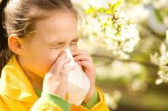 Image result for hay fever