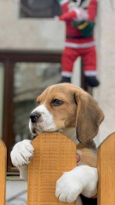 Cute Baby Dogs, Cute Dogs And Puppies, Doggies, Adorable Cute Animals, Beagle Funny, Cute Beagles, Beagle Mix, Vintage Dog, Small Dogs
