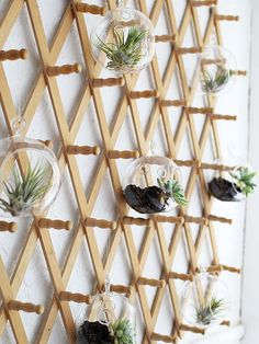 Coatrack Hanging Garden