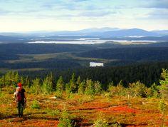 Autumn colours in Pallas-Yllästunturi National Park, Finland.