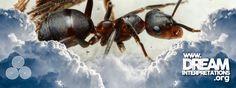 Ants - Dream Interpretation - Dream Dictionary - Dream Symbol