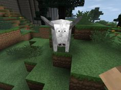 Whoa this is a rare white bull so awesome :-)