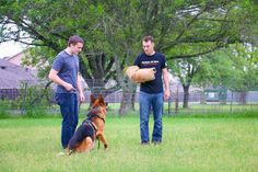 Obedience training is the first step to train any dog and is a prerequisite to any advanced training.