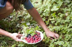 Blog — ED!BLE frische sonnengewärmte Beeren aus dem Garten auf frischen Meringuen / Pavlova. Träumst du?