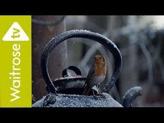 Emma Paidge - auteur jeunesse: Calendrier de l'avent J8 : pub mignonne| #HomeForC...