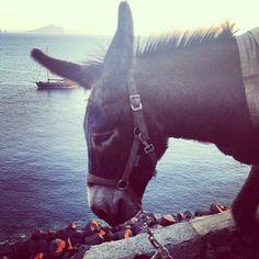 muzungusisters:  Mules of the Aeolian, no cars allowed ⛵ #Stromboli #Ginostra #Aeolian #Eolie #islandlife #mule #nocars #Sicily #summer #muzungusisters #travels