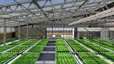 Farm in Brooklyn: Rooftop Greenhouse to be World's Largest