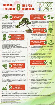 Bonsai Tree Care Infographics #smallgardenideas #sgi