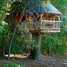 I wanna build a treehouse and spend the night in it one day.