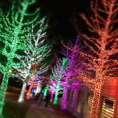 Christmas Lights Chesapeake Energy Fort Worth Texas IMG_2632