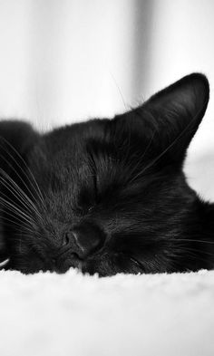 So sweet. Black cat.