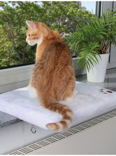 TRIXIE has been focussing on pets for over 40 years, with now products on offer and lots of ideas and information on your pet. TRIXIE has been focussing on pets for over 40 years, with now products on offer and lots of ideas and information on your pet. Cat Window Bed, Window Sill, Window Seats, Bed Cushions, Bed Lights, Cat Accessories, All About Cats, Pet Life, Cat Supplies