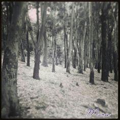 Y más bosque...