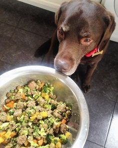 Nearly dinner time My dinner contains mostly veggies a big spoon of meat and a handful of diet biscuits #rolo #chocolatelab #chocolatelabrador #labradorsofinstagram #labrador #pets #petsagram #petsofinstagram #dogstagram #dogsofinstagram #dogs #cutedogs #cutepets #cute #animals #dinner #yum #nom by rolothechocolatelab bit.ly/teacupdogshq