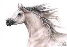 Horse drawing by Nicole Zeug, Arabian Stallion