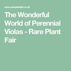 The Wonderful World of Perennial Violas - Rare Plant Fair Rare Plants, Warm And Cozy, Wonders Of The World, Perennials, Knits, Socks, Garden, Projects, Log Projects