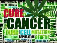 Interesting read. There Is No Mistaking The Evidence, Cannabis Cures Cancer