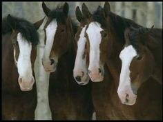 Budweiser's Clydesdales Super Bowl commercial (2003): Stupid humor is easy to do, high-brow humor, not so much. Having the Clydesdales as football players and the zebra as the referee was an absolute classic.