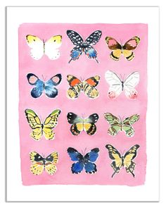 """Butterflies by Caitlin McGauley. Summer Series  Signed Giclée print  on watercolor paper  Paper size: 11""""x14""""  Image size: 9""""x12""""   $75"""