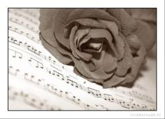 Musica nella Natura - Rosa / Music in nature - Rose