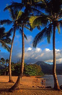 Hanalei Bay Palms, Kauai, Hawaii