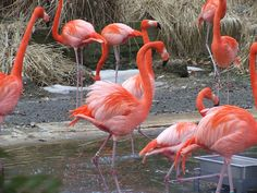 Pink Flamingos by travelar, via Flickr