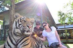 Gallery - Tiger Kingdom