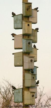 or a bunch of birdhouses on a 4 x 4 Birdie Hotel. Must Have: clever sign | protractedgarden