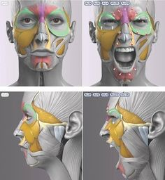Exceptional Drawing The Human Figure Ideas. Staggering Drawing The Human Figure Ideas. Anatomy Head, Facial Anatomy, Anatomy Poses, Body Anatomy, Anatomy Art, Face Muscles Anatomy, Zbrush Anatomy, Facial Muscles, Muscle Anatomy