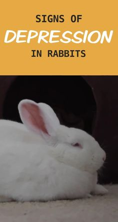 Rabbit Litter Box, Rabbit Toys, Pet Rabbit, Litter Box Training Rabbits, Rabbit Pen, Angora Rabbit, Indoor Rabbit House, Indoor Rabbit Cage, House Rabbit