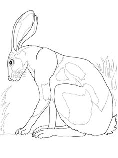 COLORING PAGES | Desert Hare
