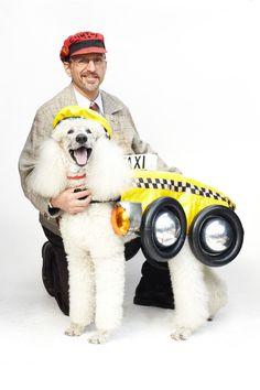 trotsky the taxi poodle