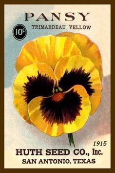 Olde America Antiques | Quilt Blocks | National Parks | Bozeman Montana : Flowers - Pansy Trimardeau Yellow
