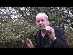 Naturalne leki - YouTube Kraut, Einstein, Film, Youtube, Fictional Characters, Movie, Film Stock, Cinema, Fantasy Characters