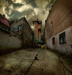A Back Alley..... and a Cat